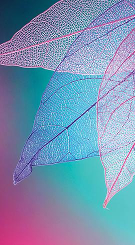 Hayatın Renklerini Gör