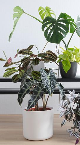 Bakımı En Kolay Bitkiler