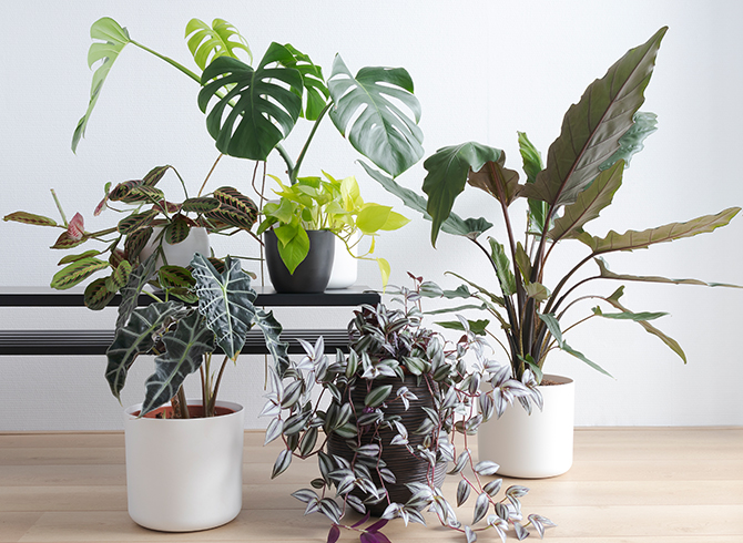 Easiest Plants To Take Care Of