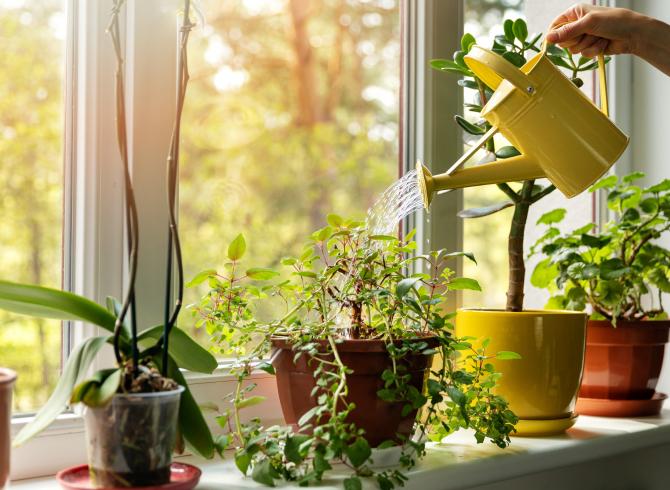 Bitki Yetiştirmeyi Sevenler İçin Tüyolar